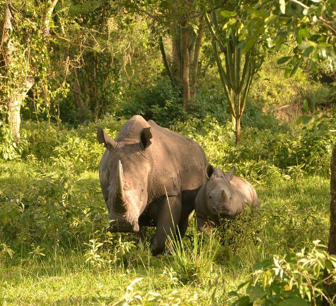 Inspiration Uganda safari